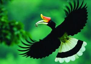 12-12-13 Mano - Hornbill 1