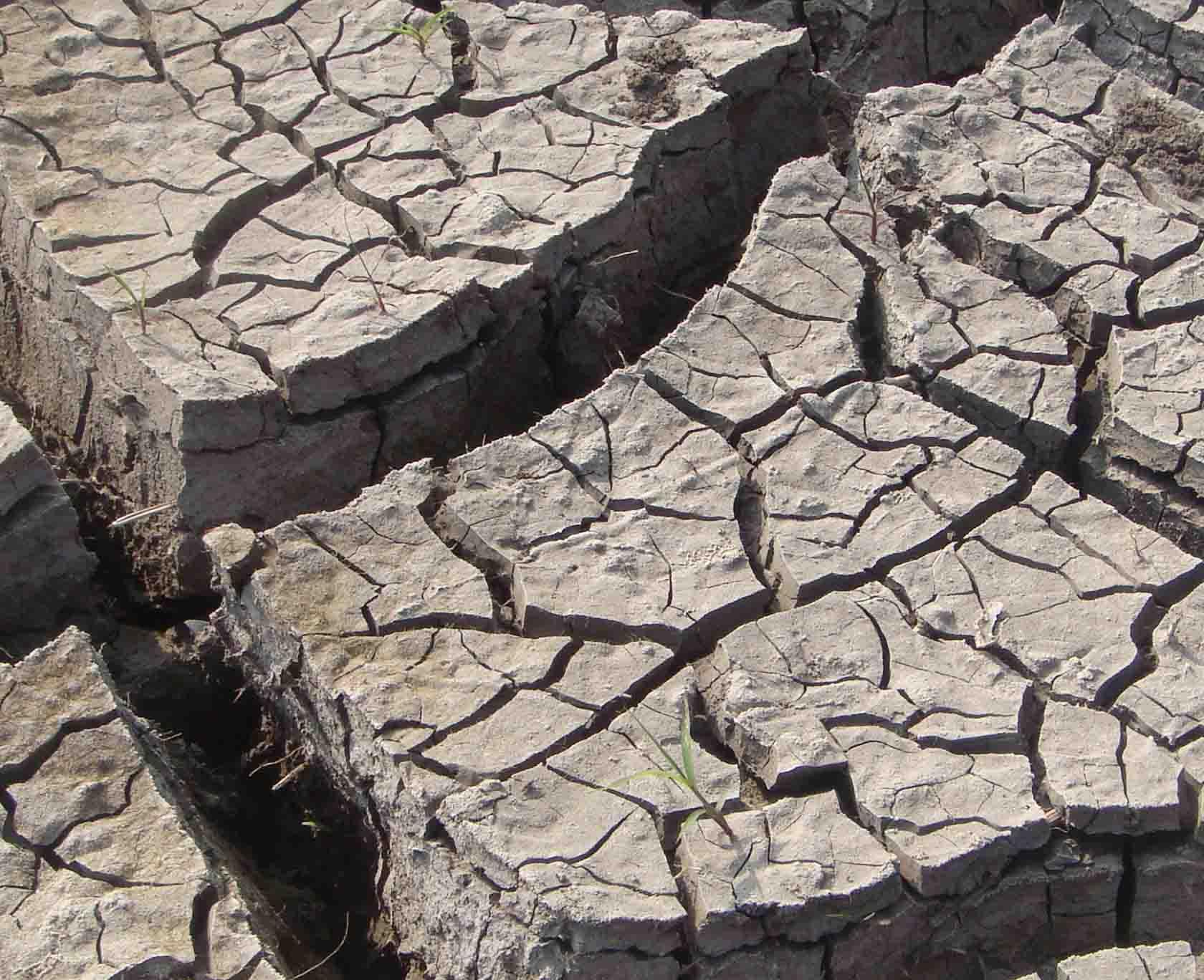 agri_drought