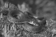 01-08-13 Gaav snake