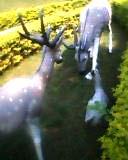 karvi 1