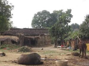 07-02-14 Gaav Singhpur
