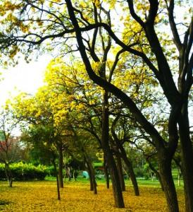 17-04-14 Mano - Spring Amaltas ed