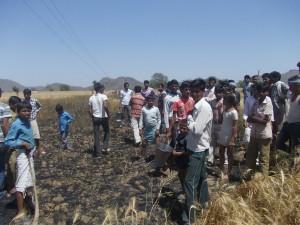 फसल की आग बुझाते किसान